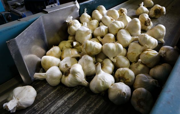 Garlic 101: How to store fresh garlic